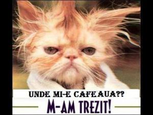 unde-mi-e-cafeaua_939062d3d8e29b